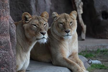 天王寺動物園22