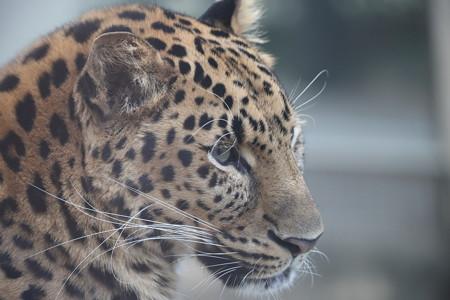王子動物園15