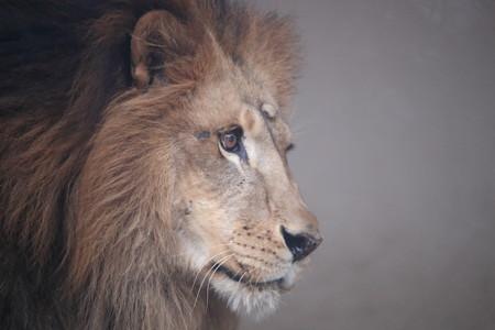 王子動物園32