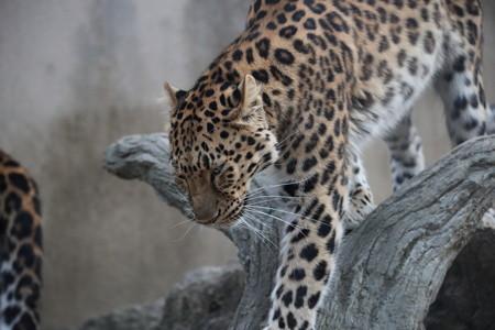 王子動物園34