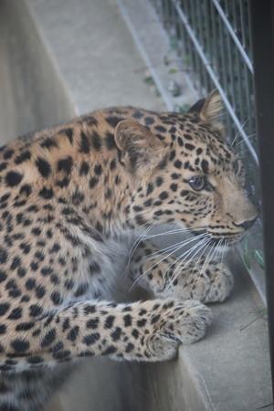 王子動物園39