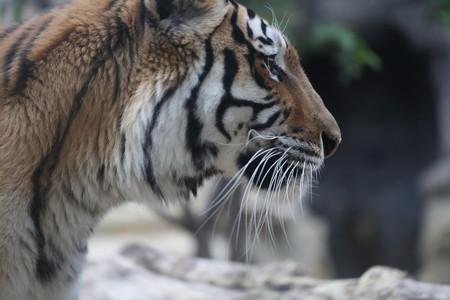 王子動物園11