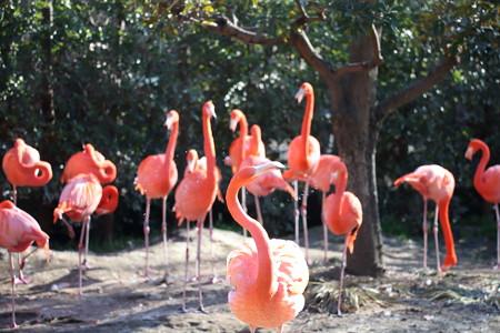上野動物園70