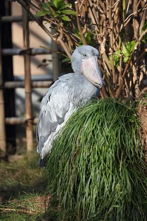 上野動物園82