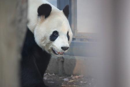 上野動物園98