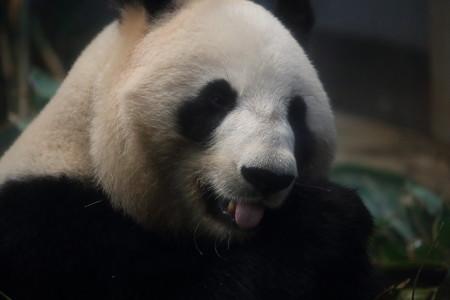 上野動物園107