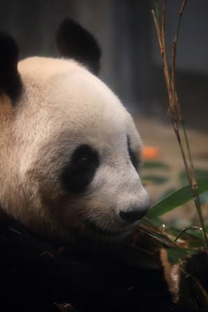 上野動物園109