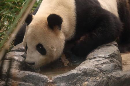 上野動物園112