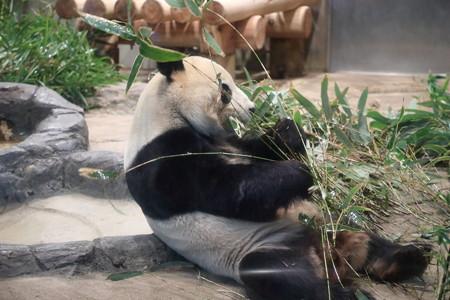 上野動物園113