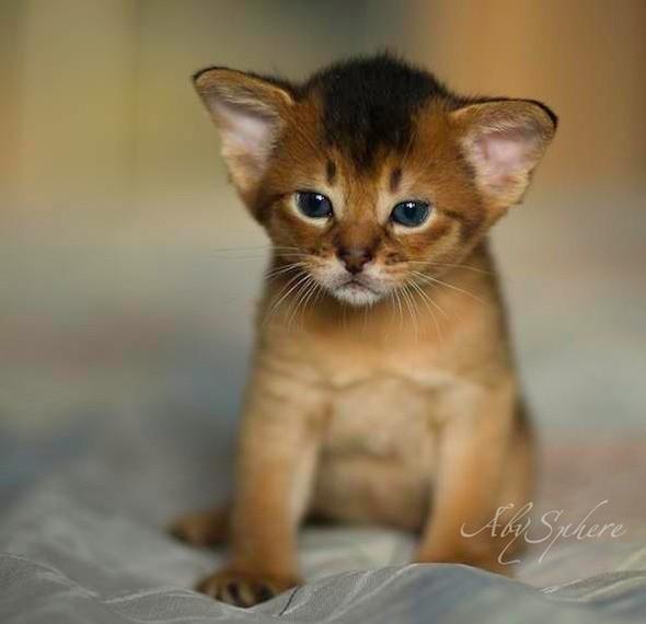kitten1026_03