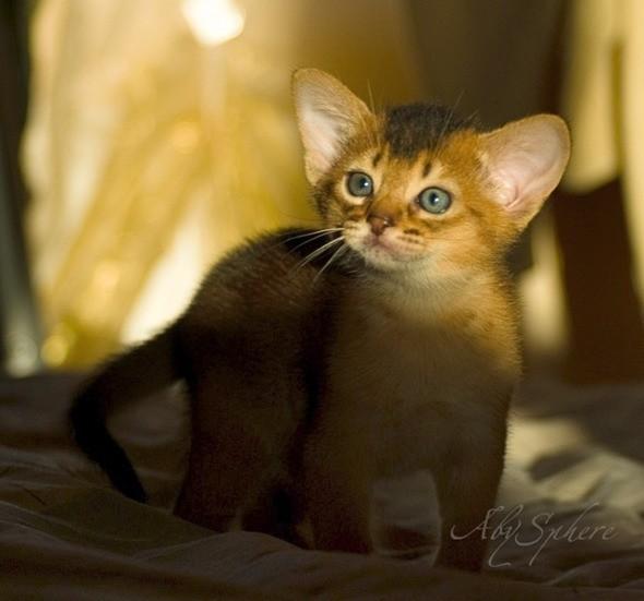 kitten1026_11
