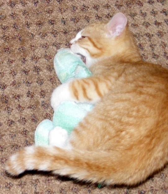 kitten1035_13