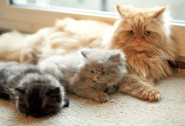 kitten1044_18