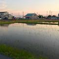 写真: 水入れが始まった田んぼ
