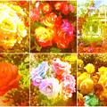 鶴舞公園:様々な色のバラ(2016年5月15日)- 10(フィルター)