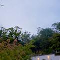 興正寺(興正寺公園) - 72:庭園上部のカラス除け