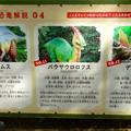 写真: 大高緑地に「ディノアドベンチャー名古屋」がプレオープン! - 89:コース内に設置されてる恐竜解説 - 4