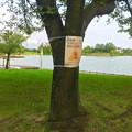 写真: 落合公園:ポケモンGoの影響で「歩きスマホ」や「自転車乗りながらのスマホ」の注意書き - 1