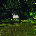 写真: ポケモンGoをやってる人が結構いた、週末の夜の落合公園 - 3