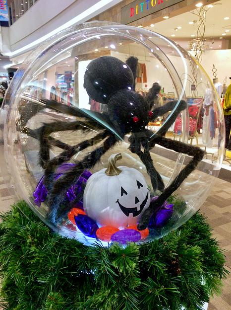 Photos: エアポートウォーク名古屋のハロウィン装飾 - 3:大きな蜘蛛