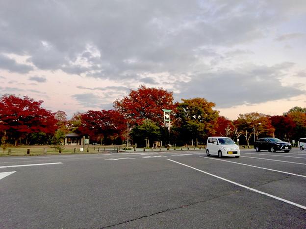 結構紅葉してた小幡緑地 - 1