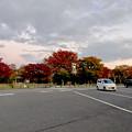 写真: 結構紅葉してた小幡緑地 - 1