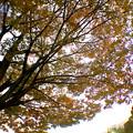 広角レンズ付けて撮影した紅葉した木 - 4