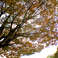 Photos: 広角レンズ付けて撮影した紅葉した木 - 4