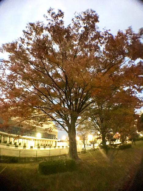 広角レンズ付けて撮影した紅葉した木 - 6