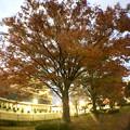 写真: 広角レンズ付けて撮影した紅葉した木 - 6