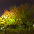 Photos: すっかり秋っぽくなっていた、夜の桃花台中央公園 - 1
