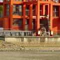写真: 水抜きした落合公園・落合池 - 12