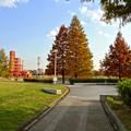 写真: 落合公園の紅葉 - 11