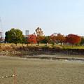 写真: 落合公園の紅葉 - 15