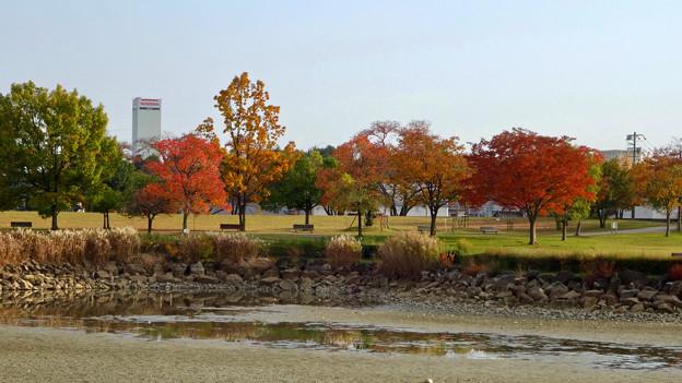 落合公園の紅葉 - 17