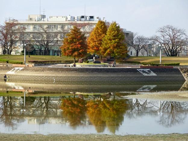 写真: 落合公園の紅葉 - 19