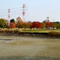 写真: 落合公園の紅葉 - 21