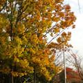 写真: 落合公園の紅葉 - 26