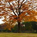 写真: 落合公園の紅葉 - 36