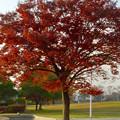 写真: 落合公園の紅葉 - 46