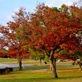 写真: 落合公園の紅葉 - 49