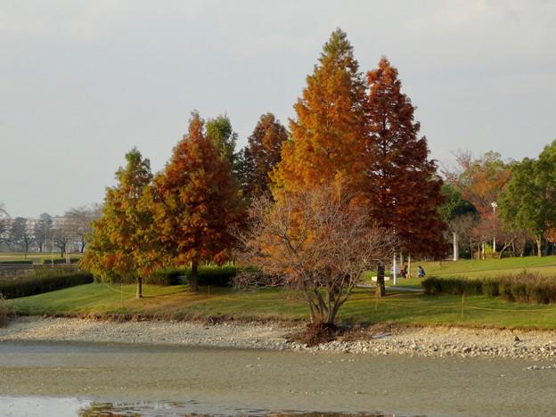 写真: 落合公園の紅葉 - 52