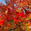 写真: 落合公園の紅葉 - 56