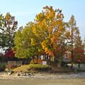 写真: 落合公園の紅葉 - 58