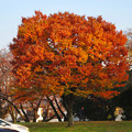 写真: 落合公園の紅葉 - 61