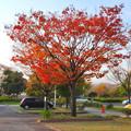 写真: 落合公園の紅葉 - 62