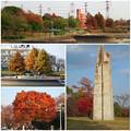 写真: 落合公園の紅葉 - 65