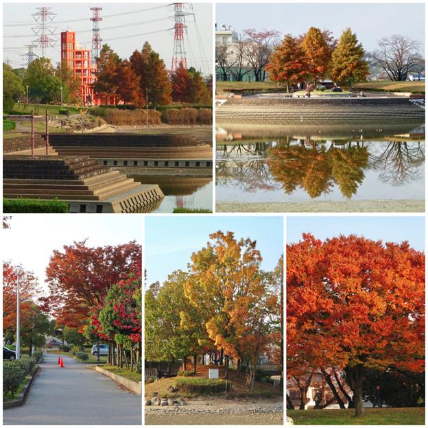 写真: 落合公園の紅葉 - 69