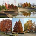 写真: 落合公園の紅葉 - 72