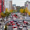 写真: 東山通・星ヶ丘駅付近の紅葉した街路樹 - 1